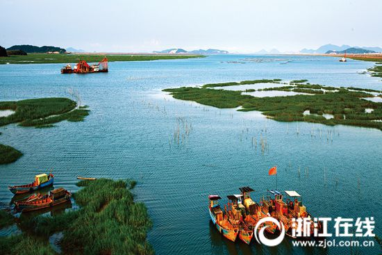 宁海县湖陈港湿地胜景